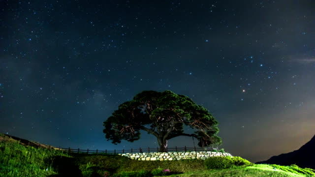 View of Milky way over an ancient pine tree in Yeongwolgun at night