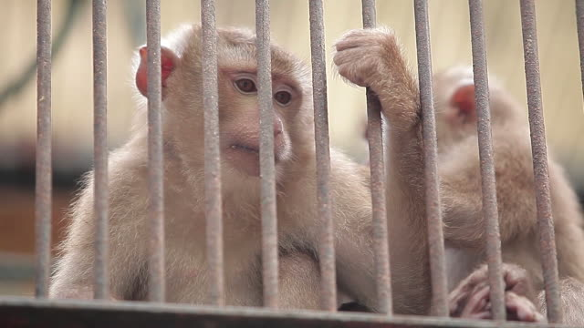 vidéos et rushes de view of monkey in  gwacheon seoul grandpark - animaux en captivité