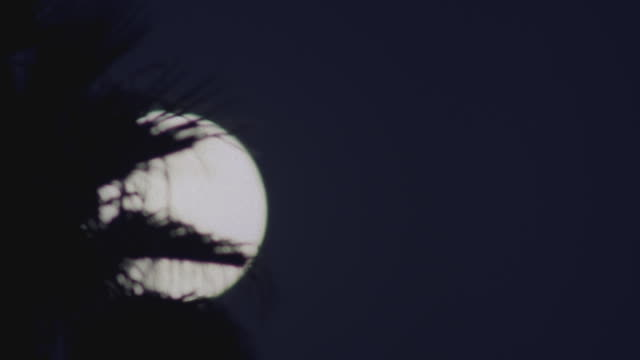 ws t/l view of moonrise over palm tree / santa barbara, california, united states - サンタバーバラ点の映像素材/bロール