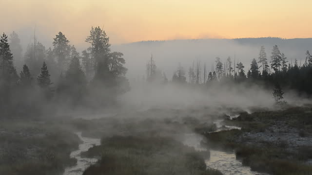 WS View of Morning Mood and steam or fog rising from small stream, UNESCO World Heritage Site, Yellowstone National Park / Yellowstone, Wyoming, United States