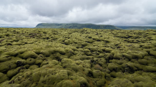 view of moss covered lava fields - muschio video stock e b–roll