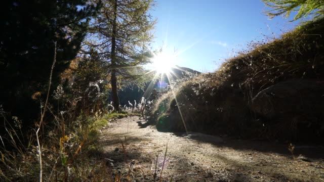 view of mountain biker riding trail, sunrise - eskapismus stock-videos und b-roll-filmmaterial