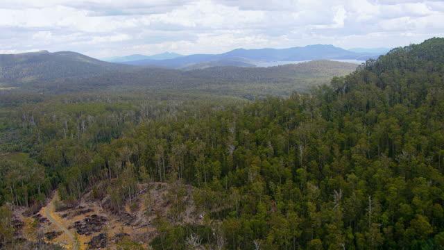ws aerial view of mountain with trees / adelaide, australia - south australia bildbanksvideor och videomaterial från bakom kulisserna