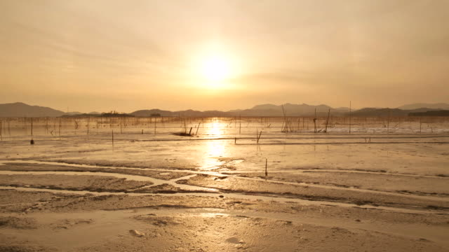 ws pan t/l view of mud flat at suncheon bay ecological park at sunset / suncheon, jeollanam-do, south korea - jeollanam do stock videos & royalty-free footage