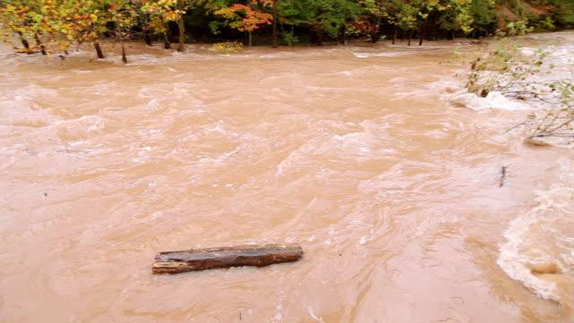vídeos de stock, filmes e b-roll de ms pan view of muddy flood stream with sawkill creek / saugerties, new york, united states - tronco parte de planta