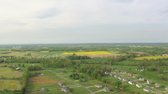ws aerial view of mustard flowers in field / kentucky, united states - ケンタッキー州点の映像素材/bロール