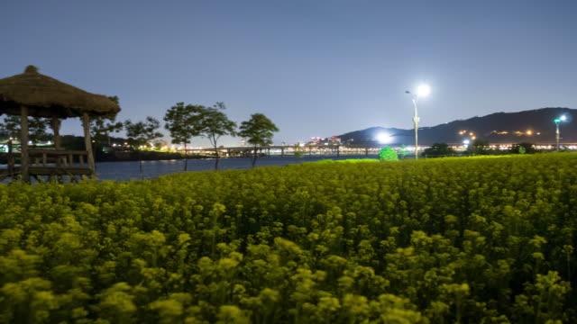 ws pan t/l view of nightscape of canola flower garden at han gang river park / guri, gyeonggido, south korea  - korea点の映像素材/bロール