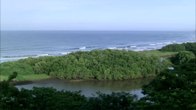 ws pan view of nosara coastline and mangrove / guanacaste, costa rica - nosara stock videos and b-roll footage