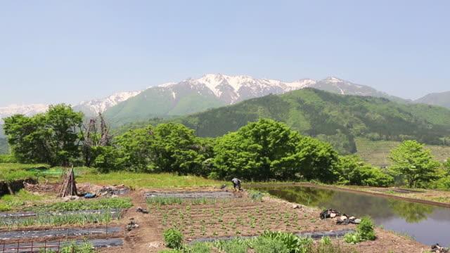ws view of old woman farmer working at farm near world heritage / shirakawa go, gifu prefecture, japan  - japanese culture stock videos & royalty-free footage