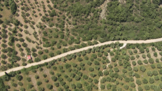 ws aerial view of olive grove / peloponnese, greece - griechenland stock-videos und b-roll-filmmaterial