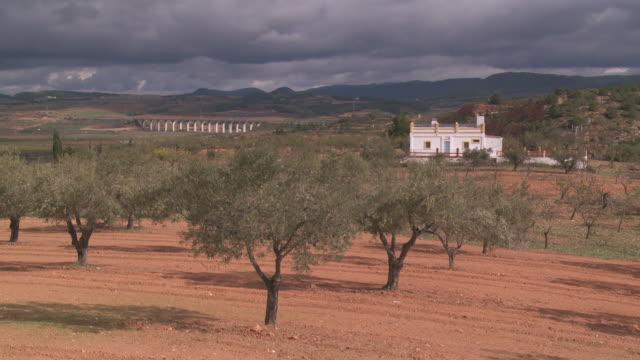 vídeos y material grabado en eventos de stock de ws view of olive orchard / murcia, andalusia, spain - huerta