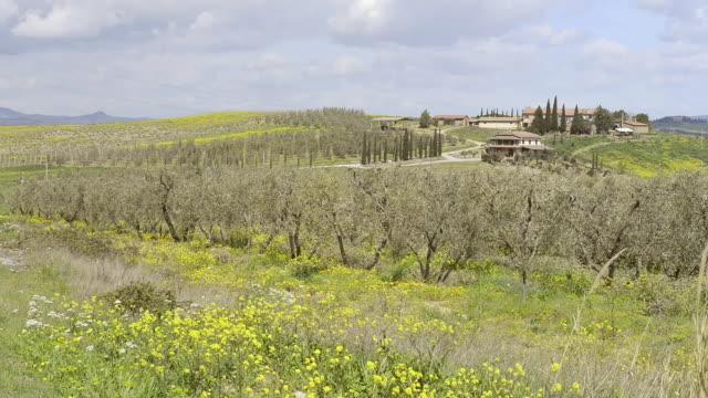 WS View of Olive tree plantation and farm house in tuscany hills / Cinigiano, Tuscany, Italy