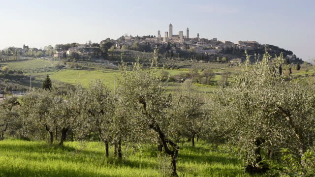WS View of Olive trees in front of medieval Village / San Gimignano, Tuscany, Italy