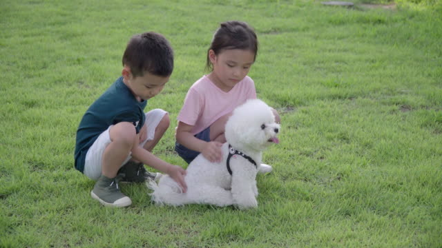 vídeos y material grabado en eventos de stock de view of one boy and one girl patting a poodle in summer at seoulforest (the third largest park in seoul city) - coreano oriental
