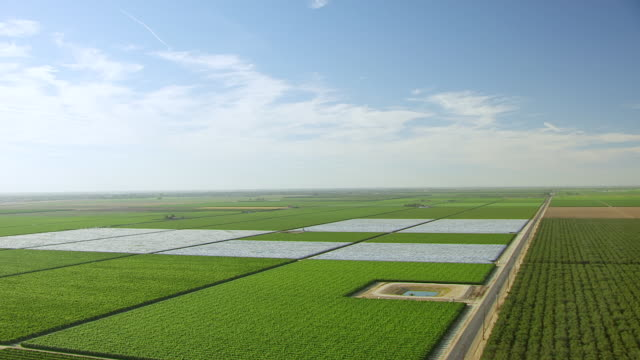 WS AERIAL POV View of Orchard Farmland with landscape at San Joaquin Valley / McFarland, California, United States
