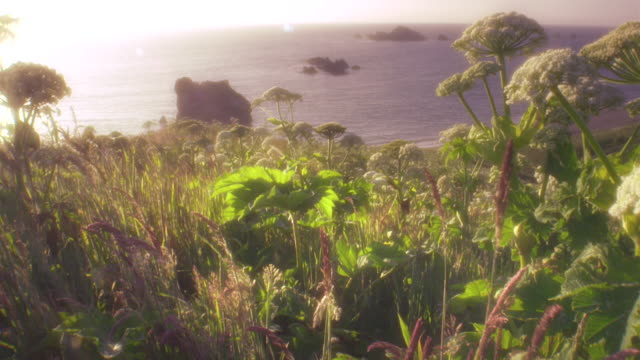 ws pov aerial view of oregon coast wildflowers and ocean / cape blanco, oregon, usa - oregon coast stock videos & royalty-free footage