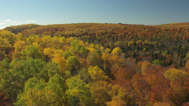 ws aerial view of over fall trees in cook county / minnesota, united states - minnesota stock videos & royalty-free footage