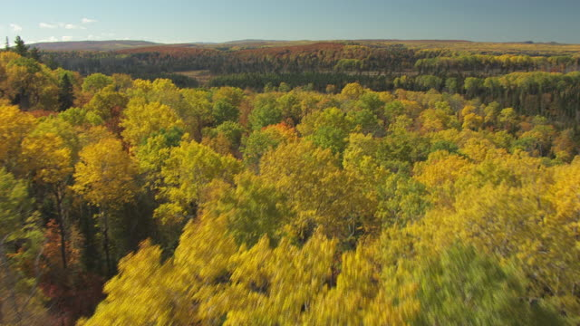 WS AERIAL View of over fall trees in Cook County / Minnesota, United States