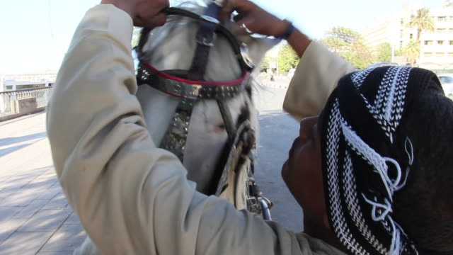 stockvideo's en b-roll-footage met ms view of owner of white horse in traditional dresss putting head harness on his horse / aswan, egypt - alleen één mid volwassen man