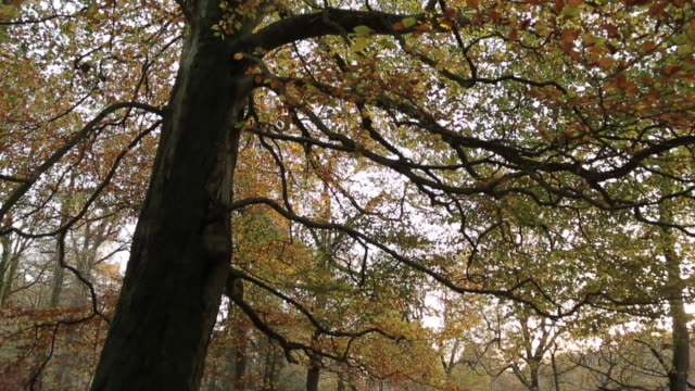 view of padley gorge near hathersage, derbyshire, england, uk, europe - derbyshire stock-videos und b-roll-filmmaterial