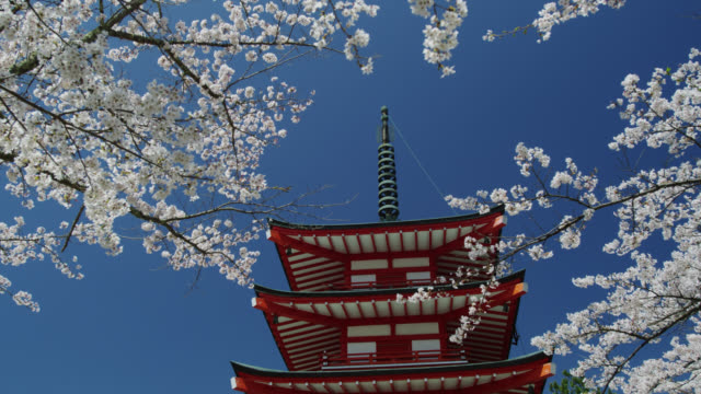 ms view of pagoda with cherry blossom trees / shimo yoshida, yamanashi, japan - pagode stock-videos und b-roll-filmmaterial