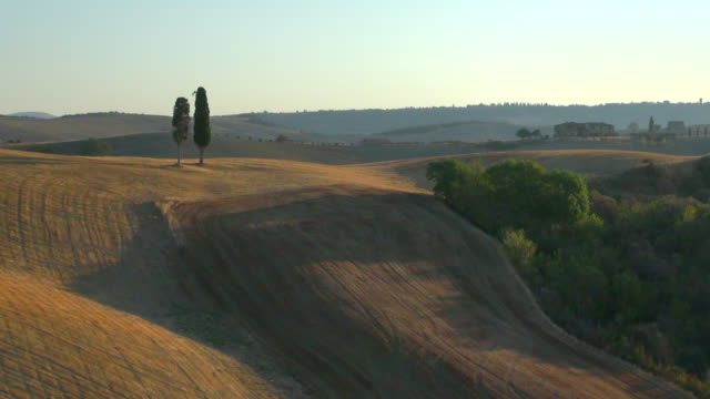 WS AERIAL View of pair of cypress trees on tuscan hills in Crete Senesi / Pienza, Tuscany, Italy