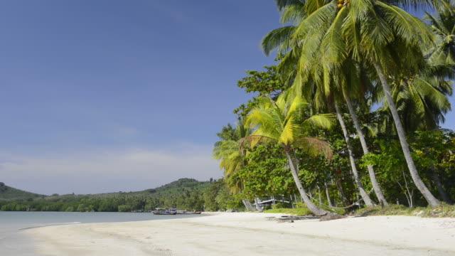 WS View of Palm trees at sandy beach, hat chao mai marine national park / Ko Mook, Trang, Thailand