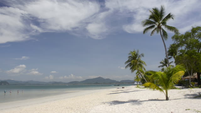vídeos de stock e filmes b-roll de ws view of palm trees at sandy beach, hat chao mai marine national park / ko mook, trang, thailand - mar de andamão