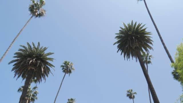 vídeos y material grabado en eventos de stock de view of palm trees lining beverly drive, beverly hills, los angeles, la, california, united states of america, north america - palmera