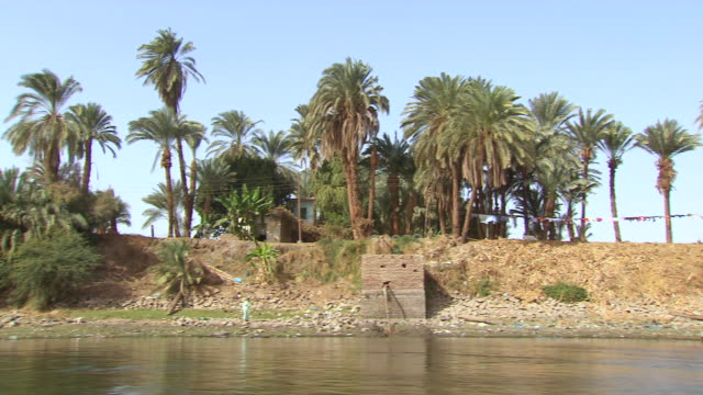 WS POV View of palm trees on riverbank / Egypt
