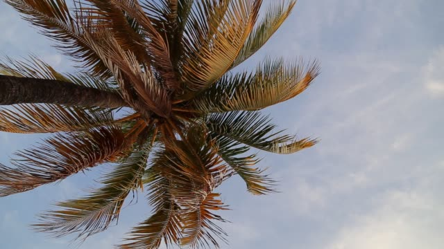 View of palms on tropical beach