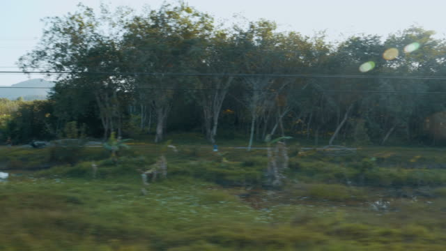 view of passing landscape while traveling by train - train vehicle stock videos and b-roll footage