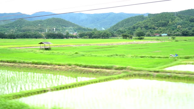 view of passing rice paddy landscape - inquadratura da un treno video stock e b–roll