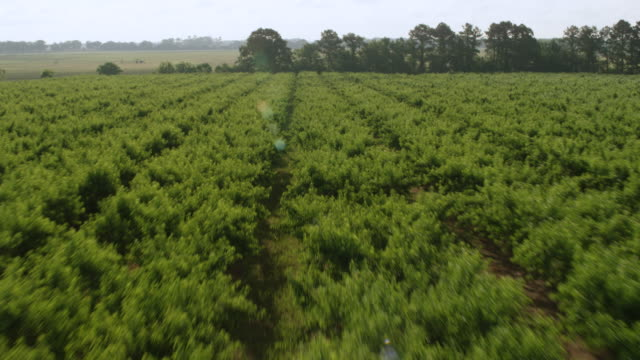 vídeos de stock, filmes e b-roll de ws aerial pov view of pearson peach farm / fort valley, georgia, united states - pomar