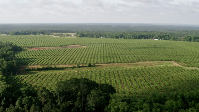 vídeos de stock, filmes e b-roll de ws aerial pov view of pearson peach farm with tree area in foreground / fort valley, georgia, united states - pomar