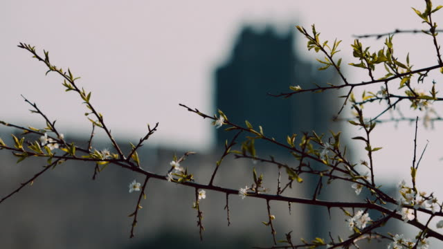 ms view of pembroke castle / pembroke, wales, united kingdom - pembroke stock videos & royalty-free footage