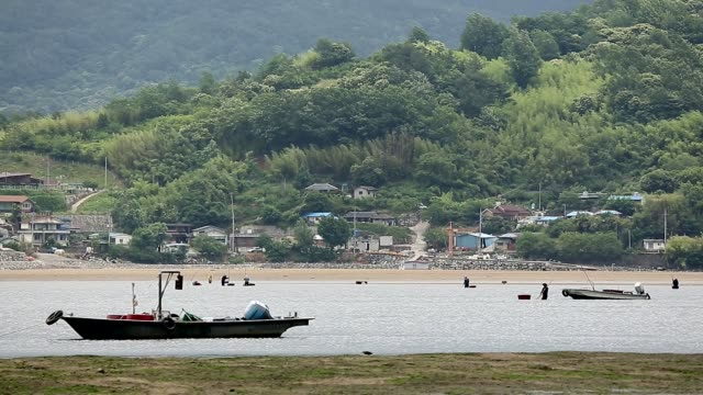 view of people catching jaecheop(small freshwater marsh clams native to korea) in seomjingang river, jeollanam-do, south korea - jeollanam do stock videos & royalty-free footage