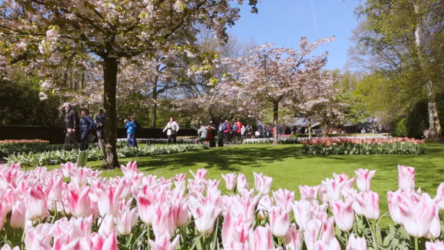 ws view of people roaming at keukenhof gardens / lisse, south holland, netherlands - south holland stock videos and b-roll footage