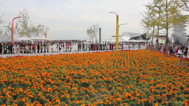 ws view of people waiting in line in 2011 international horticultural exposition/xian,shaanxi,china - orticoltura video stock e b–roll