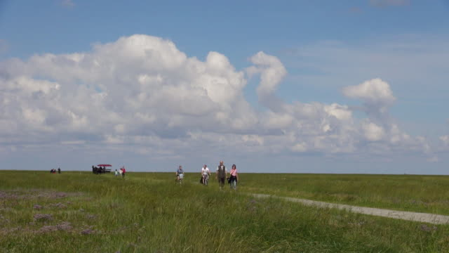 ws view of people walking and riding bicycle through salt meadows, north sea north frisia / westerhever / westerhever, schleswig holstein, germany - schleswig holstein stock videos & royalty-free footage