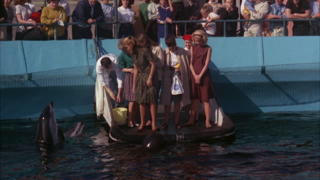 stockvideo's en b-roll-footage met ms view of peple feeding whale in marineland  / los angeles, california, united state - cetacea