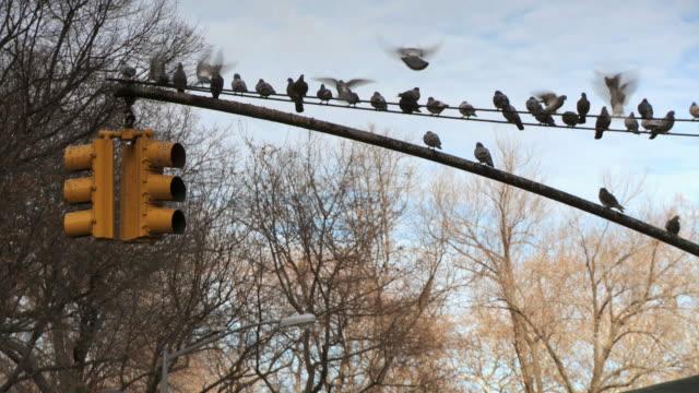 WS View of Pigeons landing on street light / New York City, New York, USA