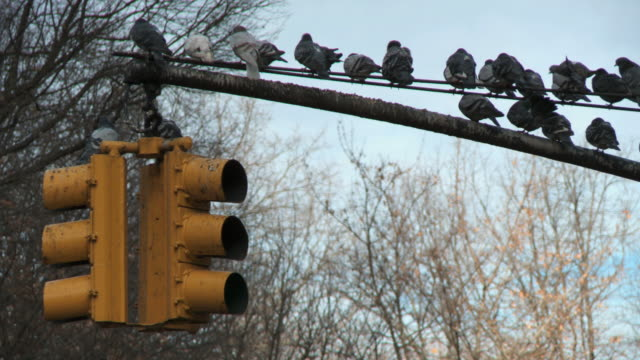 ws view of pigeons perching on street light near central park / new york city, new york, usa - perching stock videos & royalty-free footage