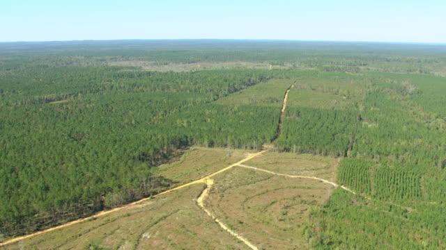 vídeos de stock e filmes b-roll de ws aerial view of pine plantation in monroe county / alabama, united states - pinhal