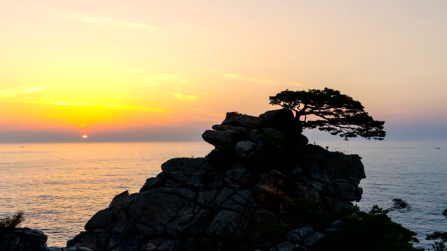 View of Pine Tree at Hajodae Beach at sunset (popular travel destination)