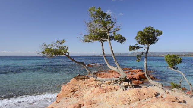 vidéos et rushes de ms view of pine trees on red rock and blue see, nature preserve / palombaggia, corsica, france - pin
