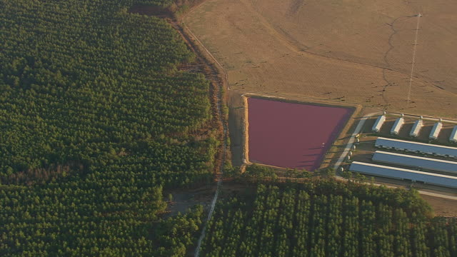 ws aerial zi view of pink lagoons farm area and forest / north carolina, united states - lagoon stock videos & royalty-free footage