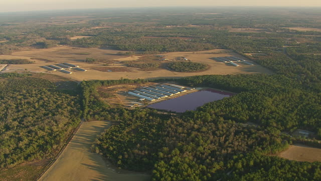 ws aerial zi view of pink lagoons farm area / north carolina, united states - lagoon stock videos & royalty-free footage