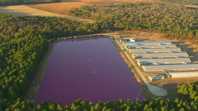 ms aerial view of pink lagoons / north carolina, united states - lagoon stock videos & royalty-free footage