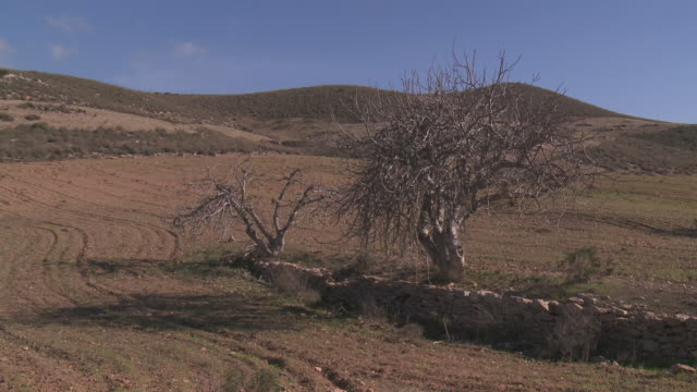 stockvideo's en b-roll-footage met ws view of ploughed field and bare tree near cabo de gata natural park / nijar, andalusia, spain - bare tree